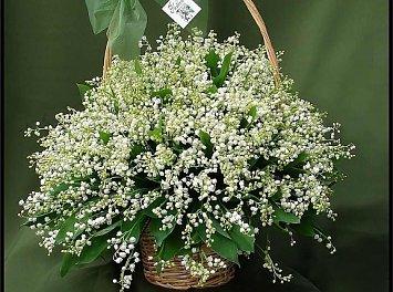 Floraria Allita Nunta Cluj